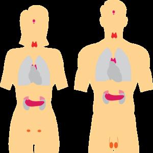 थायरॉईड ची लक्षणे व घरगुती उपाय । Thyroid symptoms and remedy in marathi
